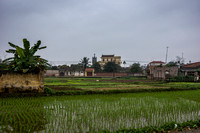 Rice fields with little church tower in background.
