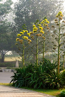 Plants in the street of New Delhi.