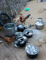 Chickens cleaning the cooking vessels.