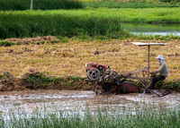 Plowing the rice paddy.