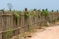 Binh Thuan: Fence made of tapioca stalks.