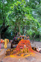A holy tree stands behind the Manasa hill.