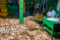 Wholesale Fish market