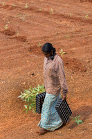 Her job is to deliver the trays where the trees will be planted.