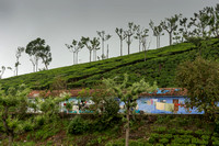 Housing for the workers of the tea plantation.