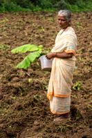Older lady with banana plant on field at Naralapura.