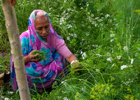 Mother harvesting herbs.