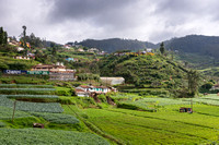 Vegetables cultivation wherever there is flat terrain.