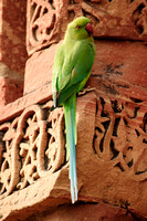 Parrot on one of the columns.