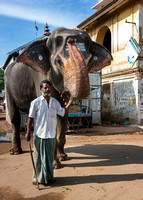 One mahout with his elephant blessing people for a fee.