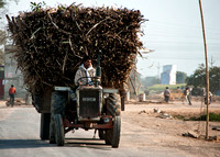 Bringing the harvested sugar cane to the farm.