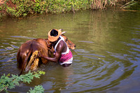 Farmer cleans the behind of his buffalo in the river.