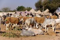 Nagaur Cattle Fair