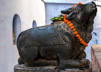 Bull at the temple.