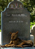 Stray dog on individual tombstone with Vishnu symbol.