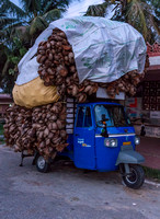 Overloaded took-took with coconut shells.