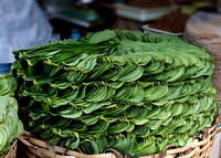 Betel leaves for sale at the market (bio name = Piper Betle.)